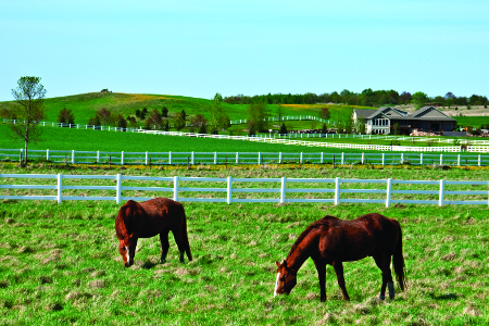 search Michigan horse properties real estate agents