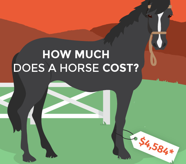 cost-to-buy-Horse-infographic-social
